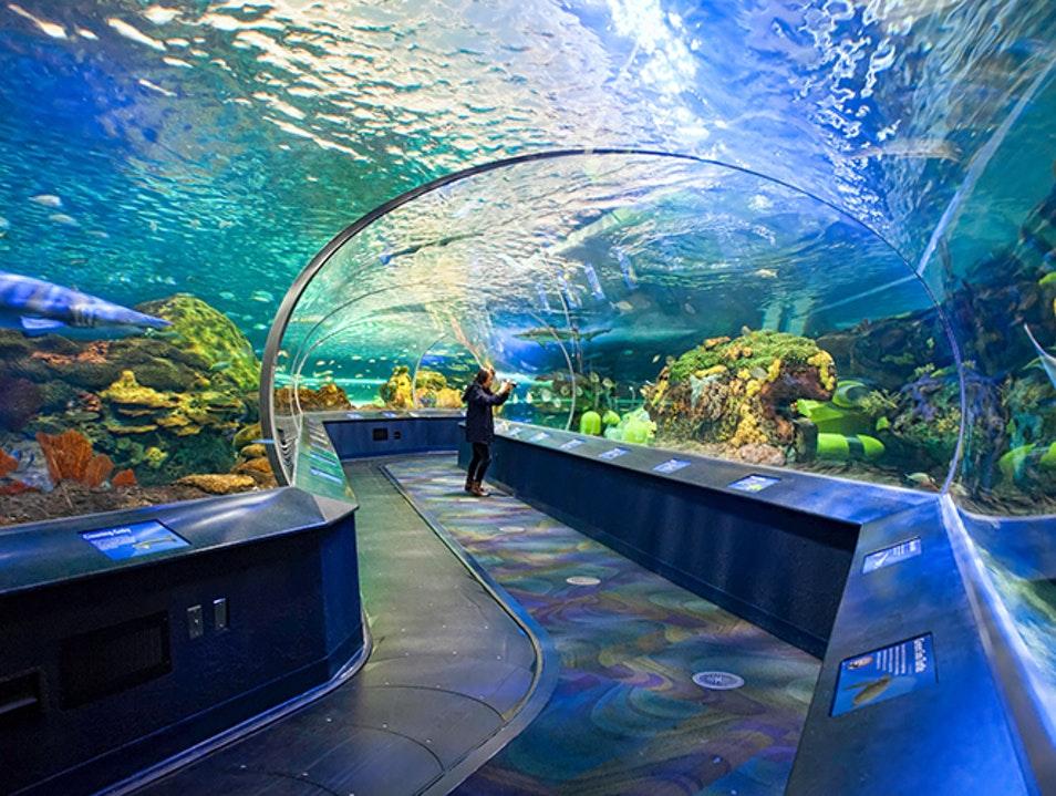 Ripley's Aquarium of Canada | Toronto | Canada | AFAR